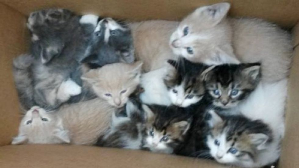 Two Stray Cat Mothers Get Help from Hikers for Their 9 Babies in the Woods