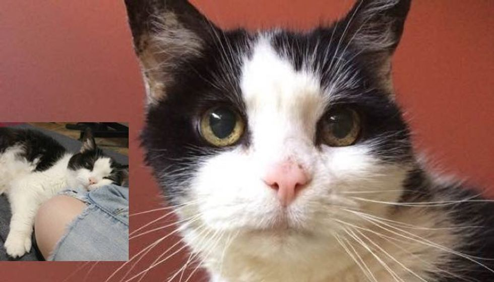13 Year Old Rescue Cat Facing Uncertain Future Until She Met Someone She'd Been Waiting for