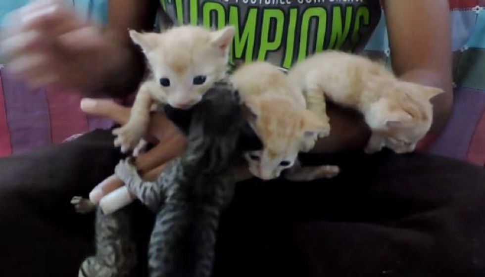 Five Orphaned Kittens Found in Exhaust Duct, Meowing for Help