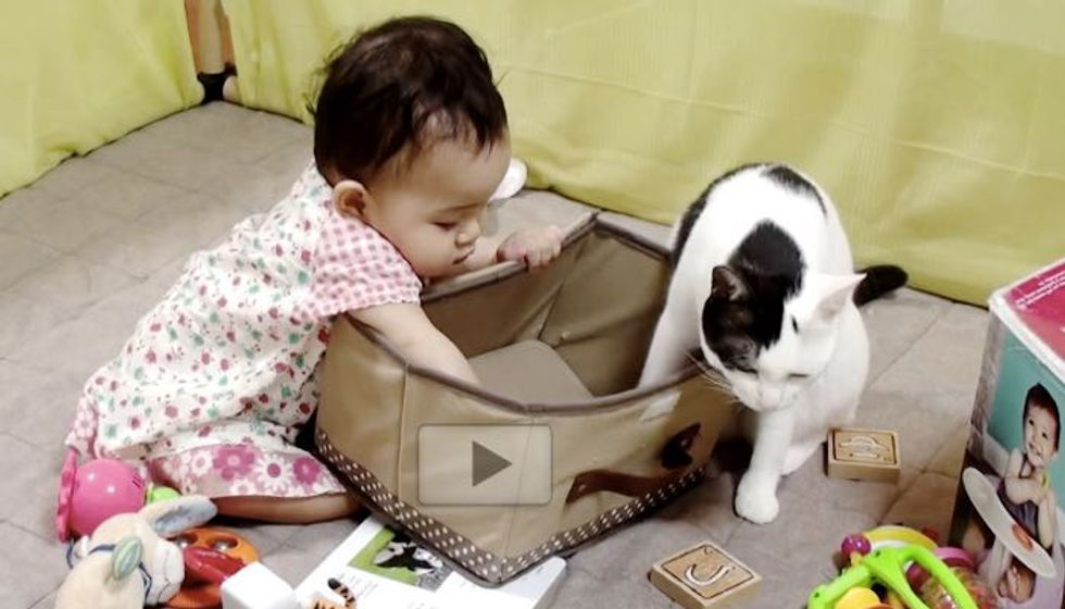 Kitty Trains Her Little Human to Use a Box