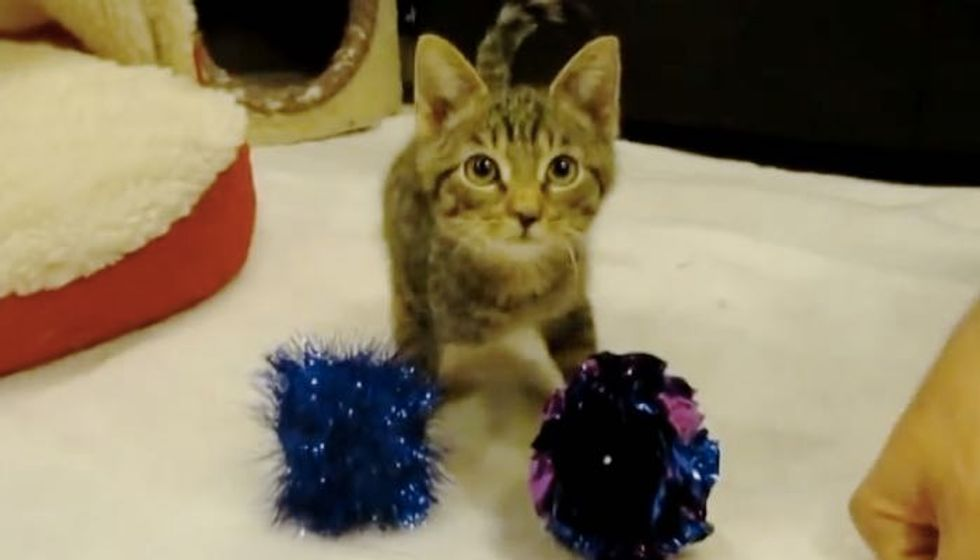 Two Legged Kitty Defying the Odds and Stealing Our Hearts