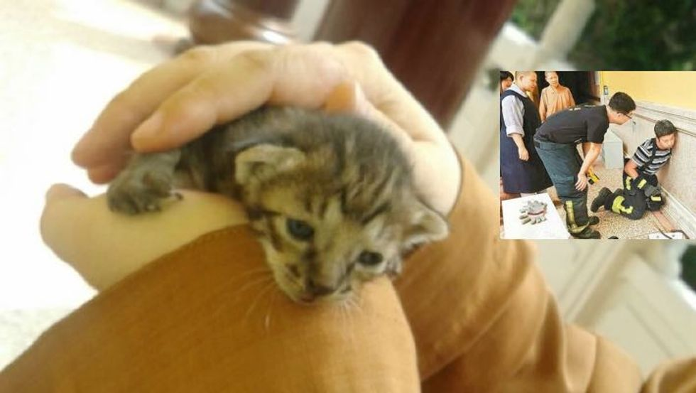 Orphaned Kitten Rescued by Monks from Inside the Temple Walls