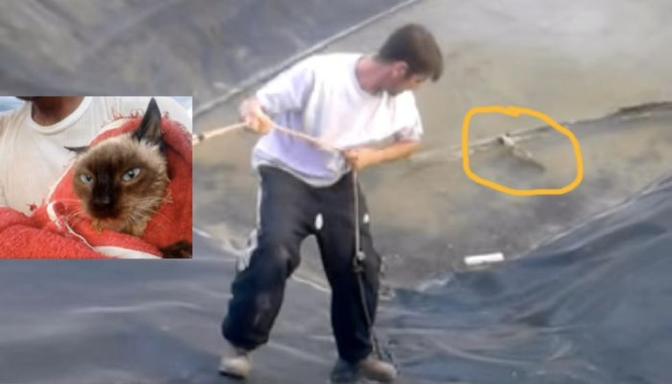Man Rescues Frightened Feral Cat from Cold Retention Pond