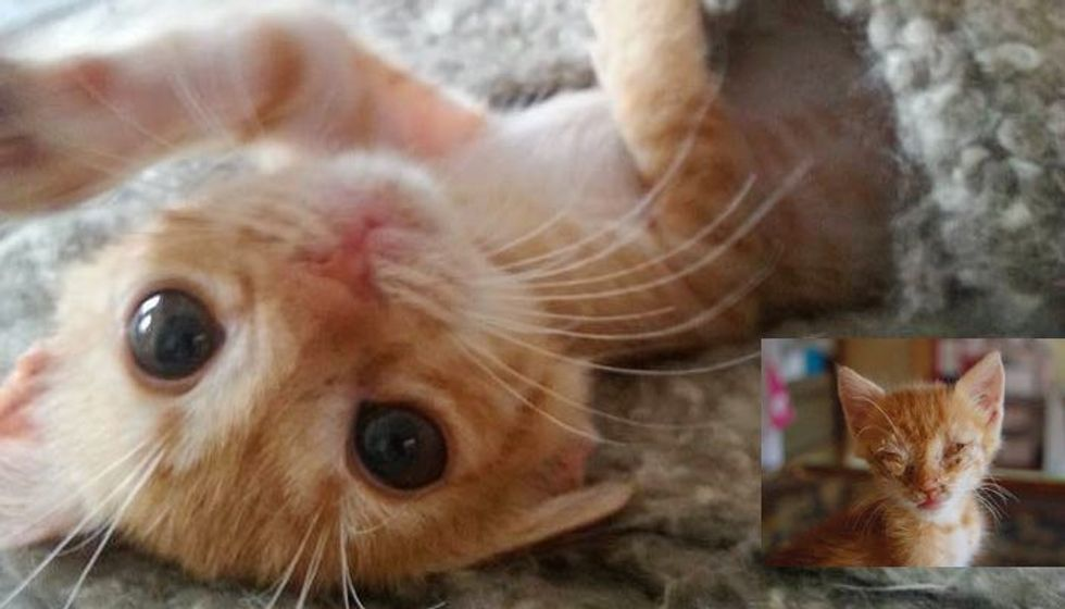 Stray Kitten Fed by Rescuer One Bite at a Time is Completely Transformed by Love