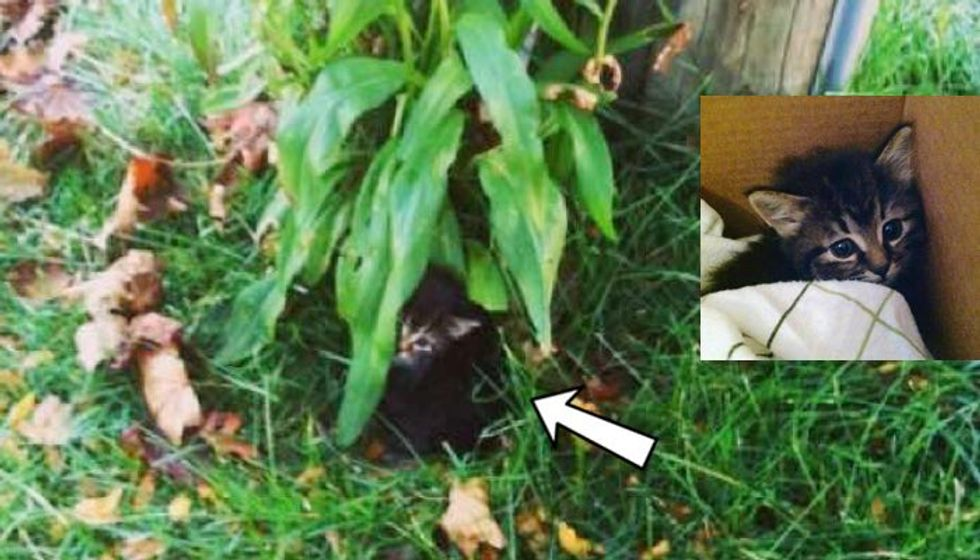 Shivering Kitten Crying from Bushes, Now Has Really Turned Around