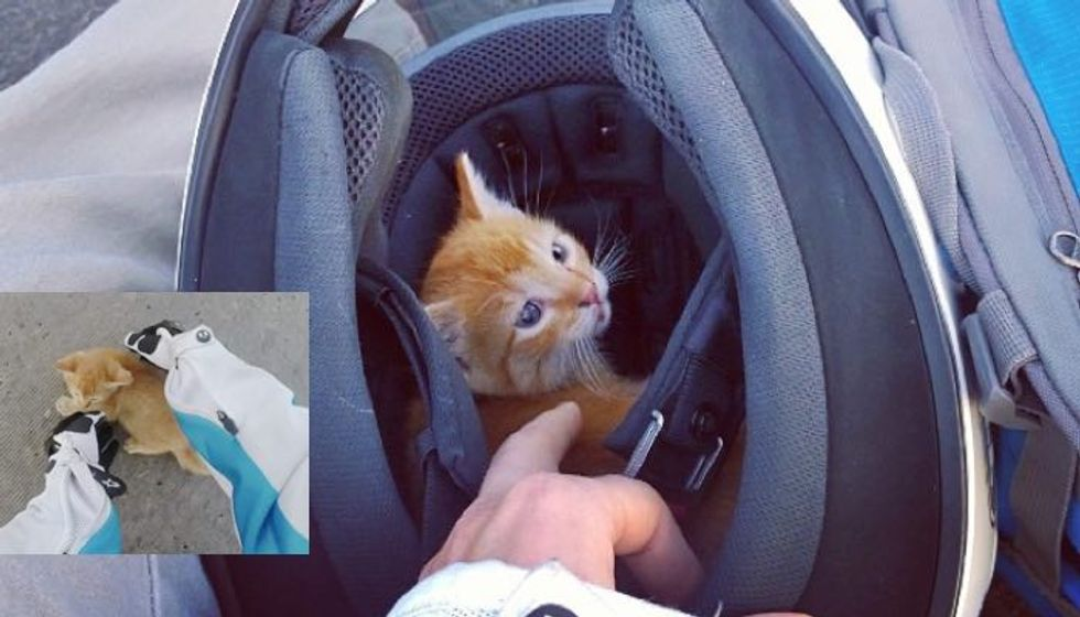 Motorcyclist Ran into Busy Intersection to Save Kitten