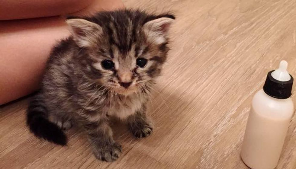 Young Man Found a Kitten by Trash Bin and Decided He Would Be Her New Dad