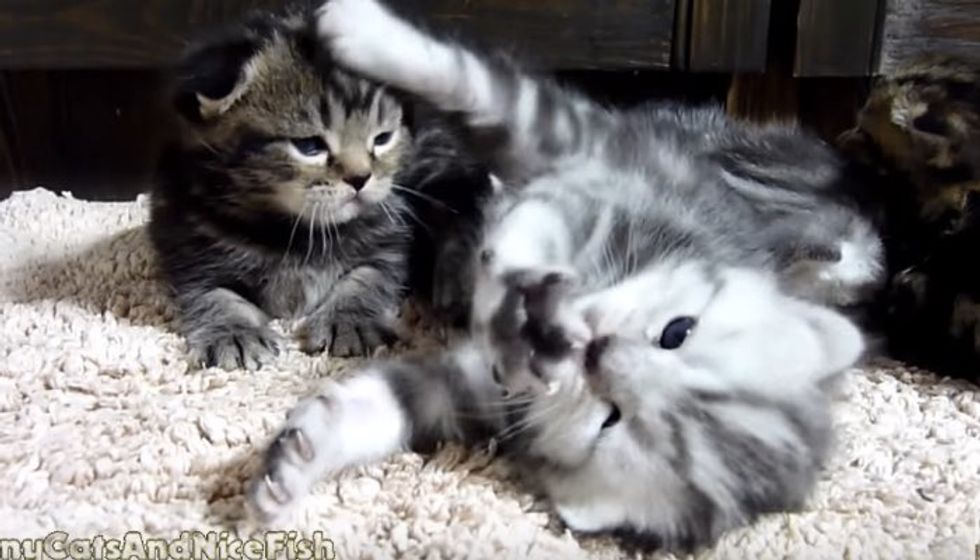 Kitten Reaching for Stars with Whappy Paws