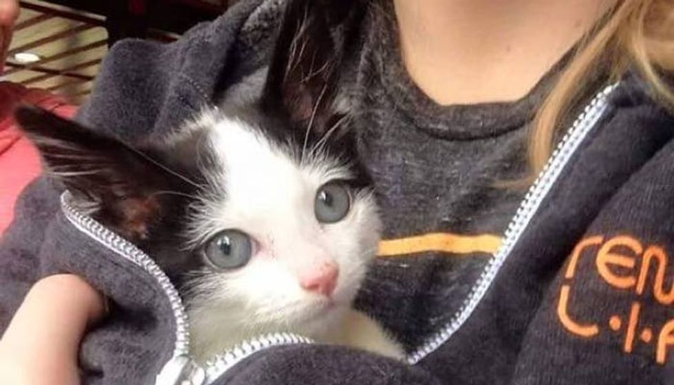She Had Less than 10% Chance to Survive. This Orphan Kitten Surprises Everyone!