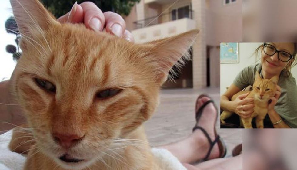 Island Cat Bonded with Kind Woman Who is Determined to Save Him