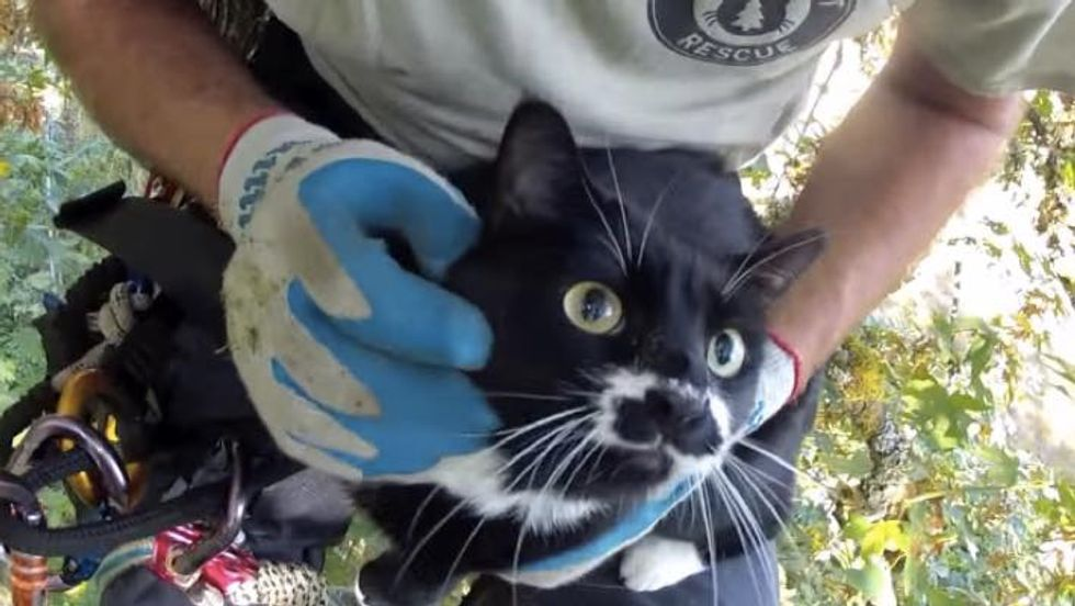 Man Climbs to Rescue Cat Stuck in Maple Tree for Days