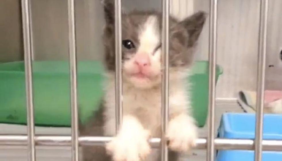 Kitten Telling Vet She's Ready for Loving Home!