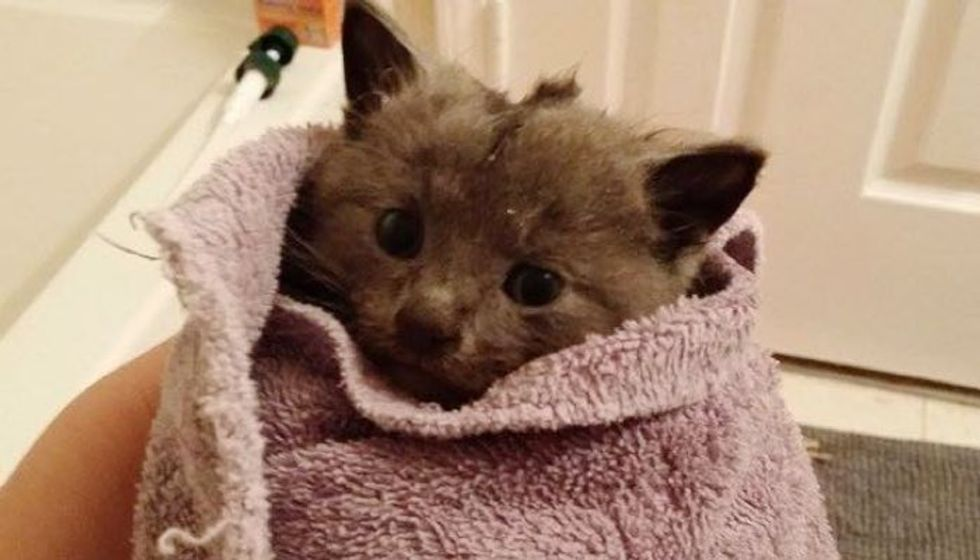 Woman Keeps Trying Until Tiny Kitten Saved from Deep Storm Drain