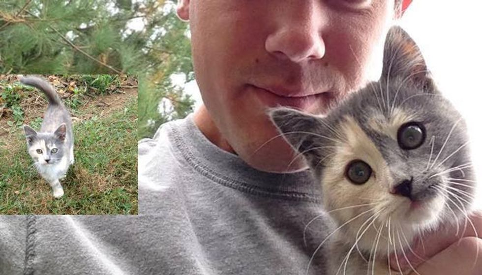 Man Captures Moments of Him Being Chosen by Calico Stray He Met in Cornfield...
