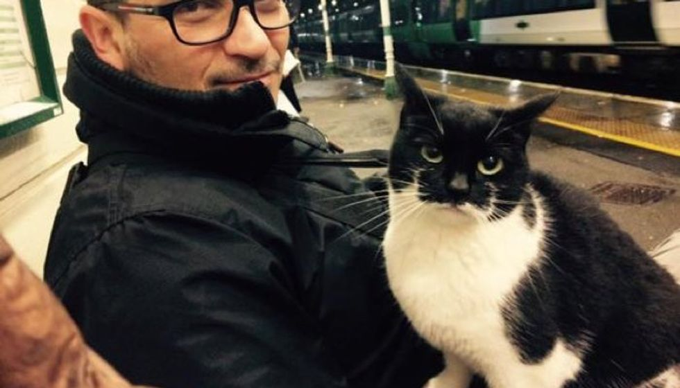 Cat Comes to Rail Station to Give Passengers Cuddles Every day