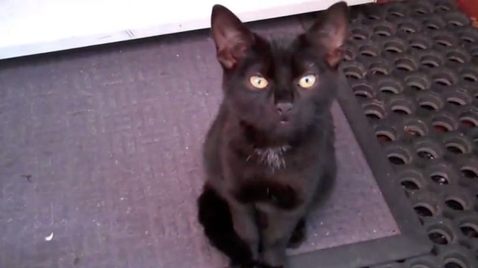 Kitten Shows up on Doorstep Demanding to be Adopted!