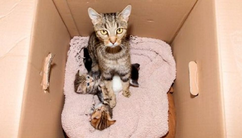 They Were Surprised by What They Found Inside a Discarded Box