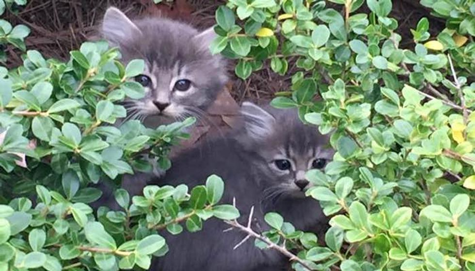 They Spent Hours Upon Hours to Save Kittens in Bushes