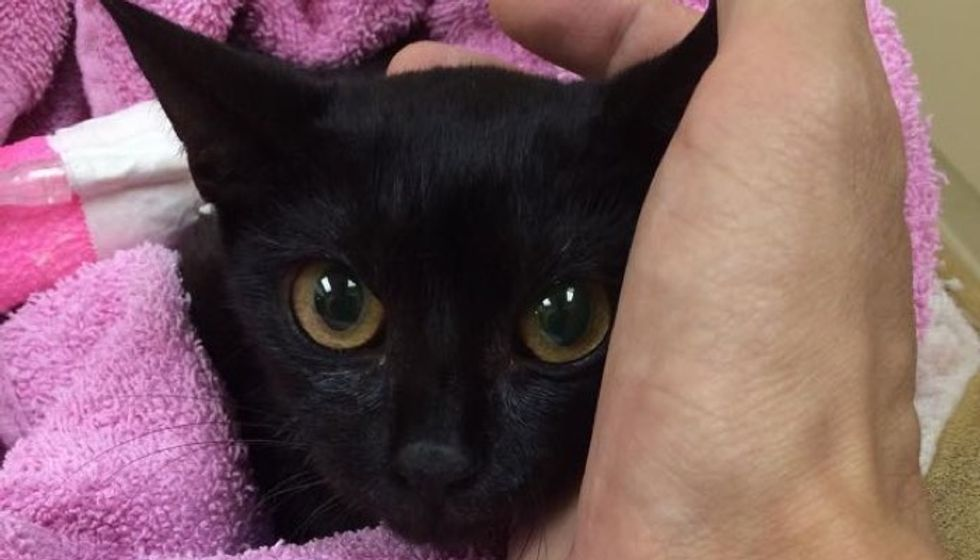 No One Expected this Rescue Stray Would Survive the Night, but Love Brought Her Back to Life