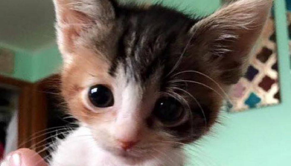 Calico Kitten with Feline Leukemia Proves that Love Gives Her Strength to Live on