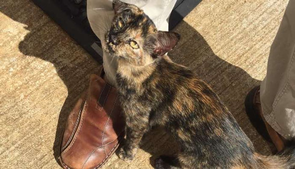 Stray Kitten Wandered Up to Factory Door and Stole Man's Heart