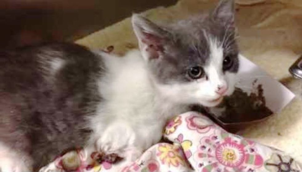 Rescue Stray Kitten Only Eats When You Pet Her