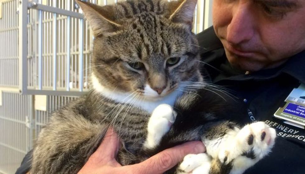 Shelter Cat with Giant Mittens Changes a Man's Life