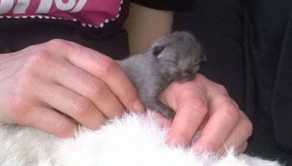 Newborn Kitten Crawling on Roadside is Saved by Love