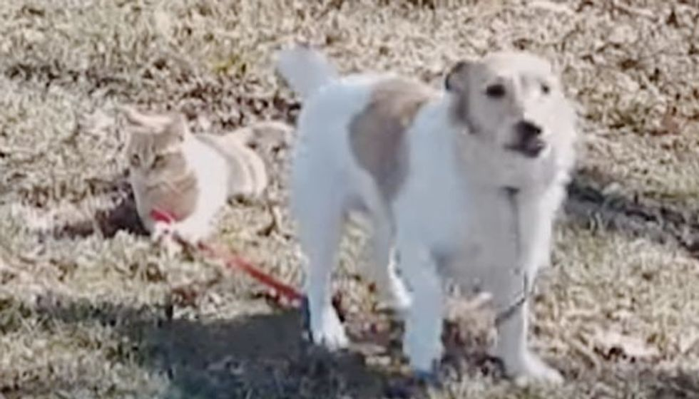 Cool Cat Holds Dog's Leash and Refuses to Let Go