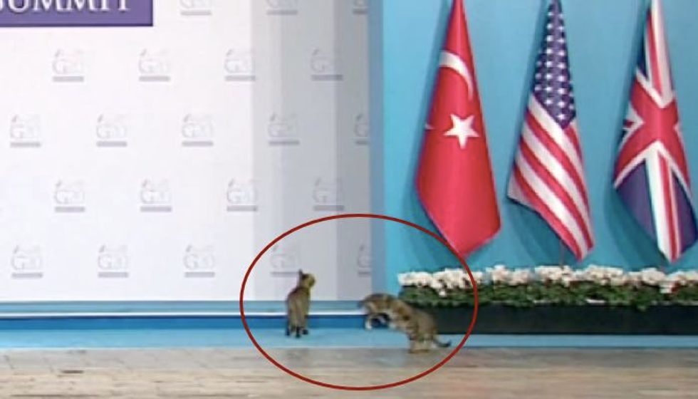 Three Cats Crash Stage at G-20 Summit in Turkey. Caught on Camera!
