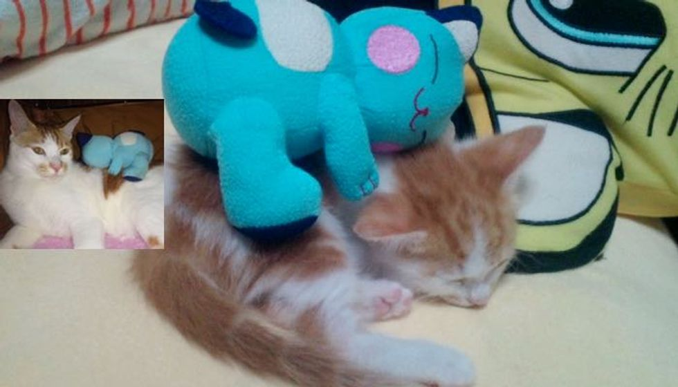 He was Smaller than Toy. Look at Him Grow!