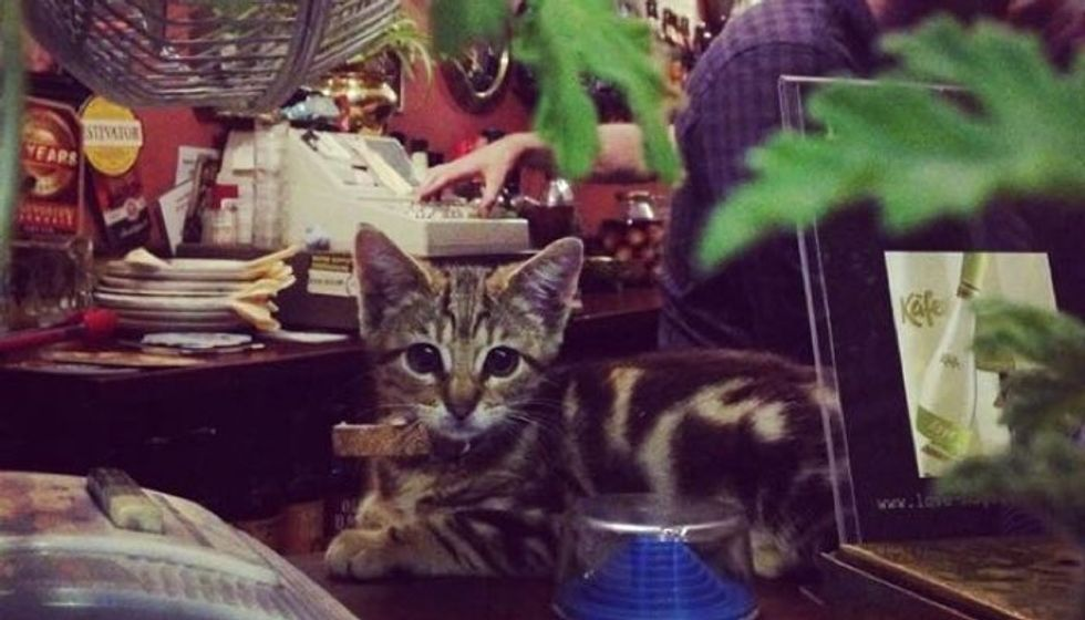 15 Cats Have Made Traditional Pub Their Home