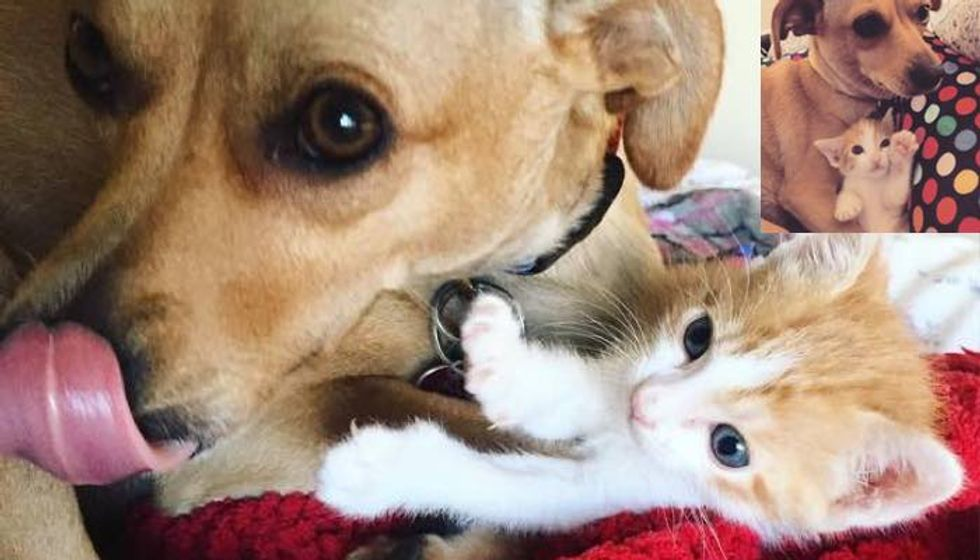 Rescue Dog Becomes Sister to Orphaned Kitten