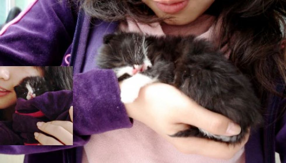 Tuxedo Kitten Holds onto Rescuer and Won't Let Go