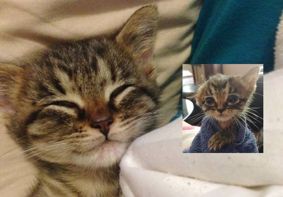 What a Loving Home Can Do for a Little Tabby