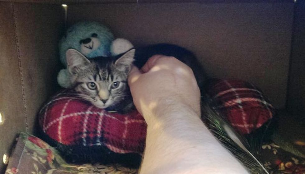 Shelter Kitty Got Ignored because She Wasn't a 'Whole Cat' until Someone Saw Her Differently