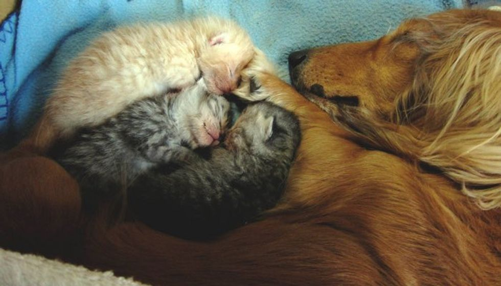 Blind Dog Gives Orphaned Kittens Love of a Mother