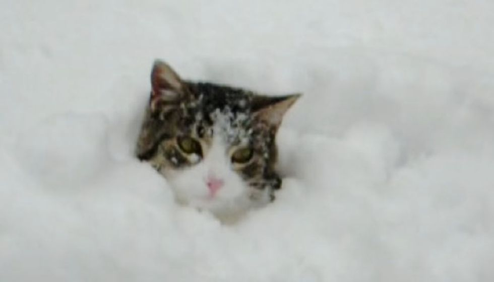 Cat Likes Burrowing in Snow like Bugs Bunny