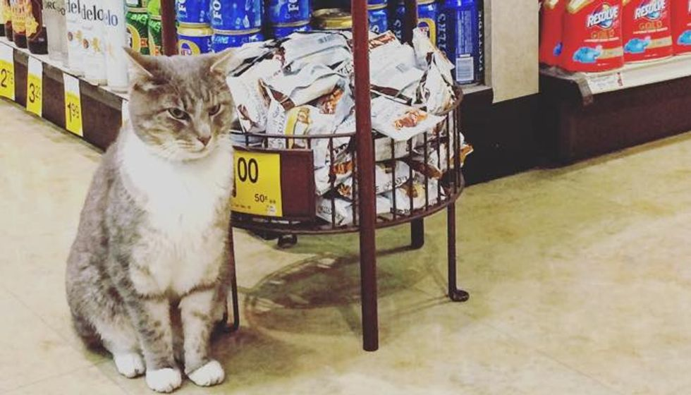 Cat Comes to Safeway Store Every Morning to Hang out with Customers