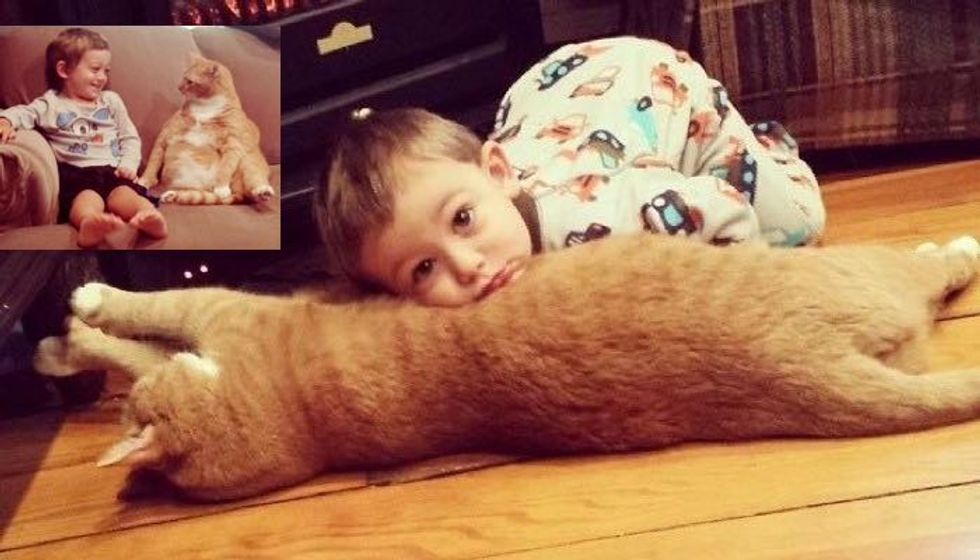 'Unwanted' Ginger Cat Becomes Guardian to Boy, His Human for Life...