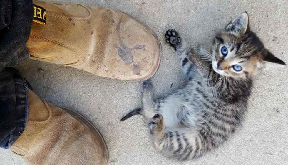 Motherless Kittens Walk Up to Father and Son for Help