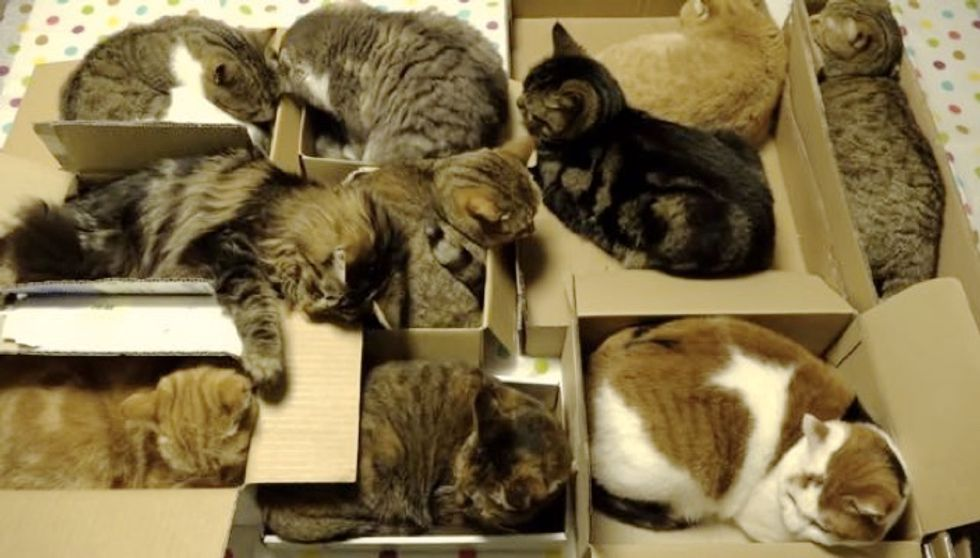 10 Cats Have a Slumber BoxParty Together. It's Brilliant!