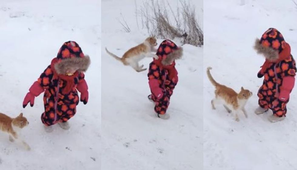 Cat Wants Hugs from Little Human and Won't Take No for an Answer