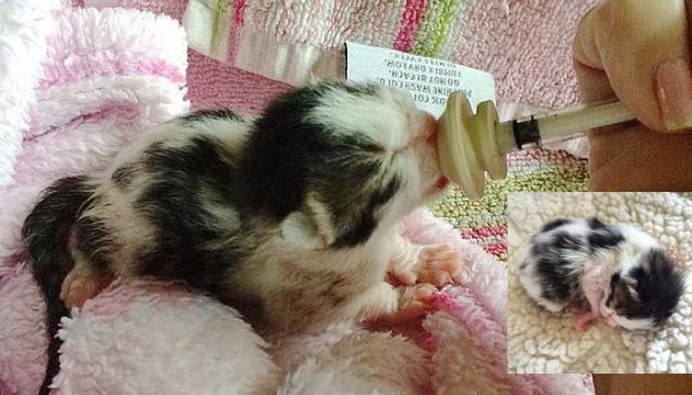 Tiny Newborn Kitten Found on Side of Busy Road, Journey to Forever Home!