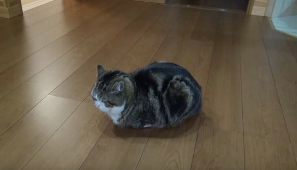 Perhaps the Smallest Box Maru Has Attempted to Fit in