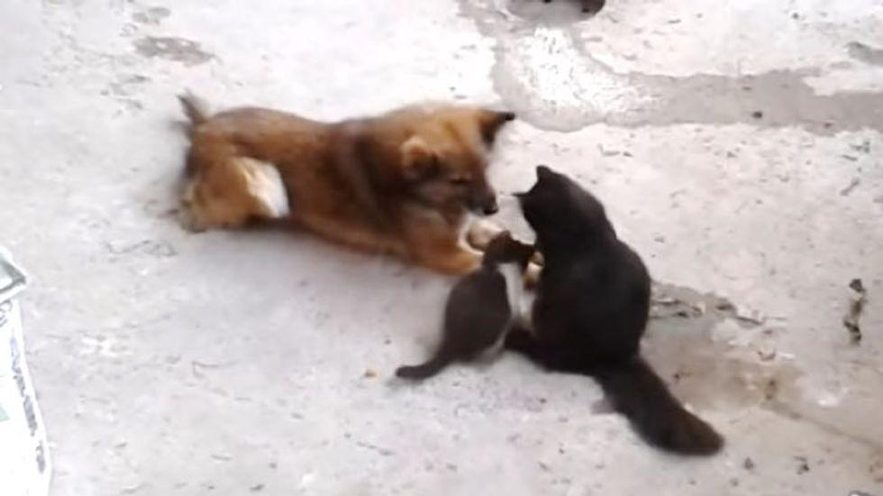 Cat Mama Brings Her Kittens to Meet a Good Friend