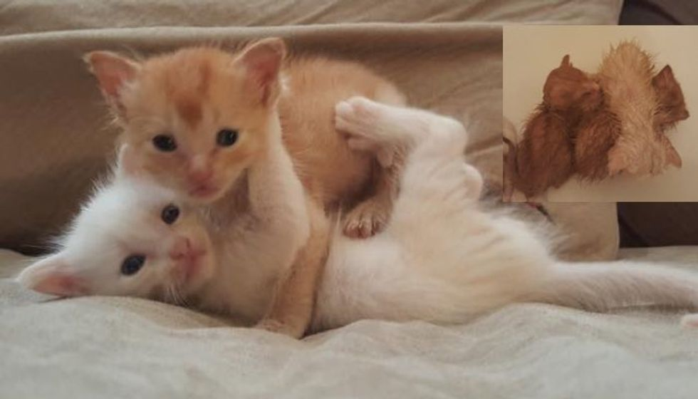 Abandoned Kittens Rescued from Garage. Look at the Transformation!