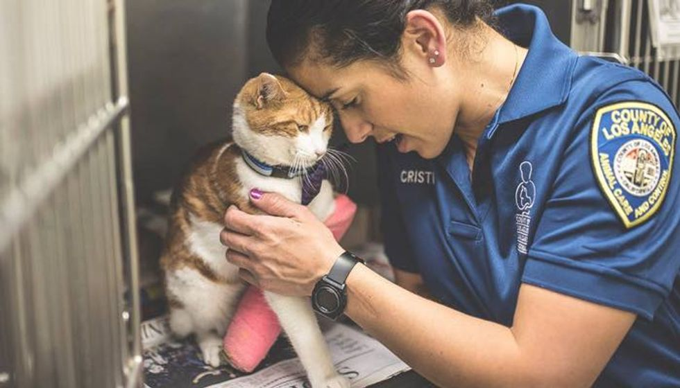 Shelter Cat with Injured Leg Now Has Only Days Left to Find a Home