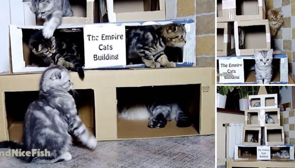 Instead of Christmas Tree, these Kitties Got 'the Empire Cats Building'