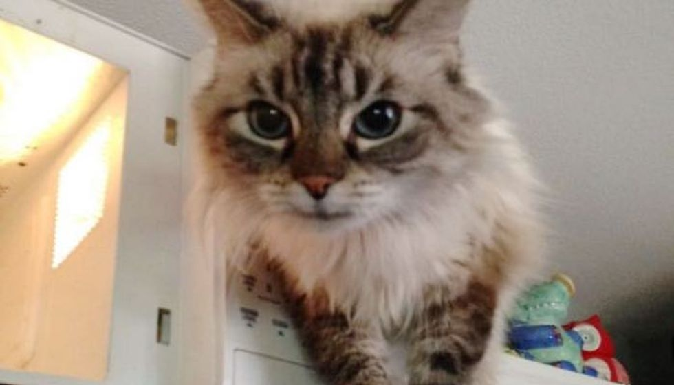 Shelter Cat Saved from Death Row Now Guards His Microwave while Waiting for His Forever Humans